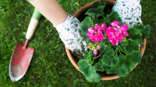 5 Smart Gardening Hacks for Pain-Free Planting