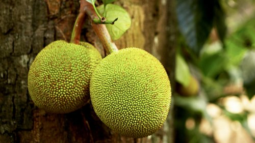 This Tasty Tropical Fruit Will Protect Your Liver, Ease Chronic Pain, and Balance Blood Sugar