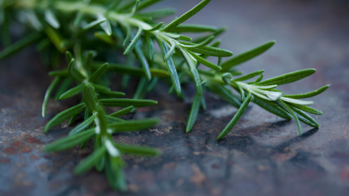 This Popular Herb Could Lower Inflammation, Reduce the Risk of Cancer, and Prevent Brain Aging