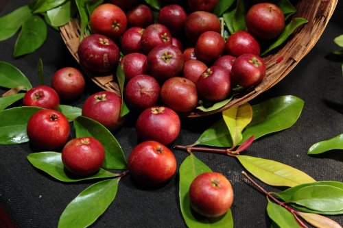 Anti-Aging Kokum Butter Fights Wrinkles and Hair Loss