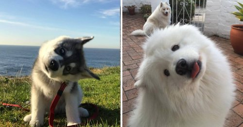 27 Adorable Photos Of Dogs Showing Off Their 'Head-Tilting' Skills