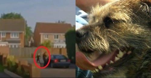 La fin de l'angoisse pour la famille d'un chien volé en plein jour, dont l'enlèvement a été filmé