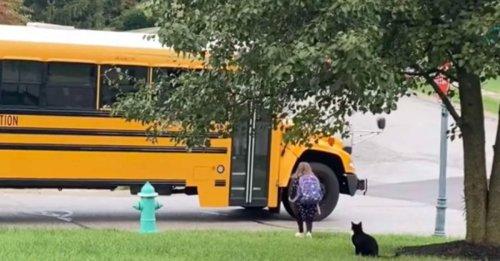 La routine matinale d'un chat protecteur qui accompagne une petite fille jusqu'au bus scolaire (vidéo)
