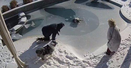 Le sauvetage réflexe d'un homme pour sauver son chien piégé sous la glace de sa piscine (vidéo)