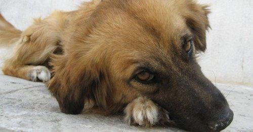 Un chien traîné à l'arrière d'une voiture puis abandonné sur le périphérique, le conducteur recherché par la police