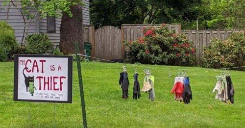 Propriétaire d'un chat kleptomane, une femme met au point un dispositif amusant pour prévenir ses voisins