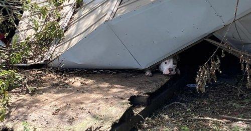 Une équipe de secours déploie tous ses efforts pour libérer un chien coincé sous un hangar effondré à la suite d'un ouragan