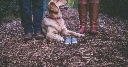 Décision de justice rare : un juge accorde à un couple la garde partagée de leur chien