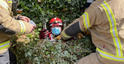 Des pompiers viennent à la rescousse d'un chat coincé dans un puits de 6 mètres de profondeur depuis une semaine