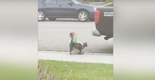 Triste, un petit garçon s'assoit seul sur le trottoir. Jusqu'à ce qu'un chat amical s'approche pour le consoler ! (Vidéo)