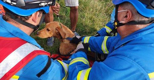 Une foule de randonneurs assiste en direct au sauvetage d'un chien tombé d'une falaise de 9 mètres