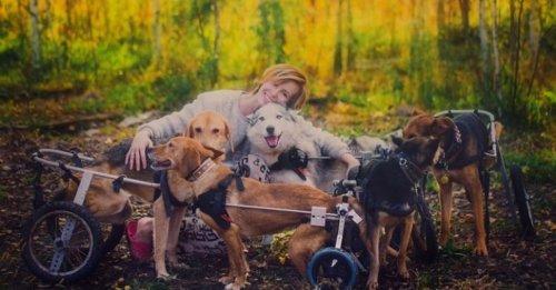 Une célèbre photographe abandonne sa carrière pour soigner des chiens malades dans la forêt