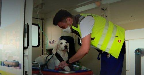 En Suisse, les animaux de compagnie ont droit à leur ambulance en cas d'urgence médicale