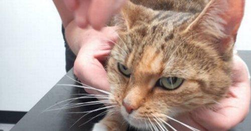 Un homme puni par le tribunal après avoir abandonné son chat pendant 4 jours, sans nourriture ni eau