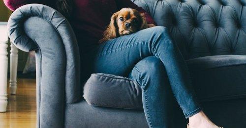 Une pet-sitter payée 50 centimes de l'heure, ébahie par les demandes folles d'un homme pour s'occuper de son chien diabétique