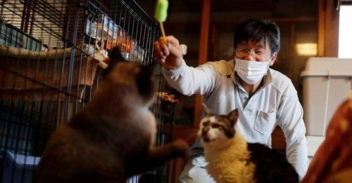 Depuis la catastrophe nucléaire de Fukushima, cet homme passe sa vie à sauver les chats abandonnés sur le site