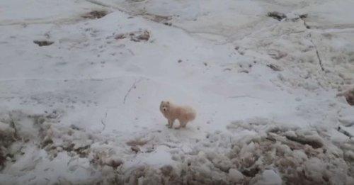 Des marins russes au secours d'un chien perdu sur la banquise