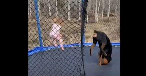 La vidéo adorable d'une petite fille et de son Rottweiler s'amusant comme des fous sur un trampoline