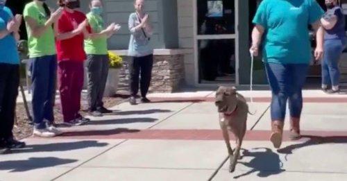 Le chien le plus ancien d'un refuge reçoit une ovation lorsqu'il part pour rejoindre sa nouvelle famille (vidéo)