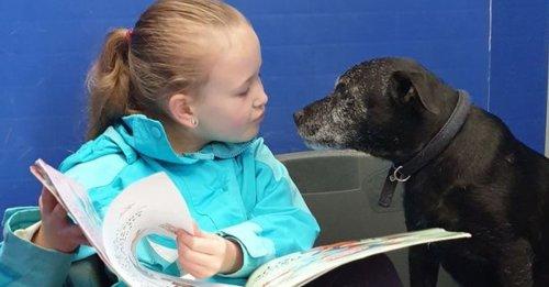 Une petite fille se donne pour mission d'aider les animaux effrayés et nerveux d'un refuge en leur lisant des histoires (vidéo)
