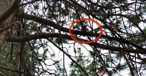 Un homme grimpe dans un arbre de 25 mètres pour récupérer un chat piégé depuis une semaine