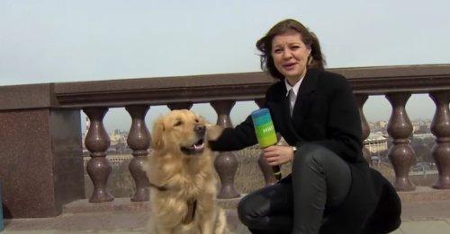 Un chien espiègle vole la vedette à une journaliste en plein direct lorsqu'il se sauve avec son microphone ! (Vidéo)