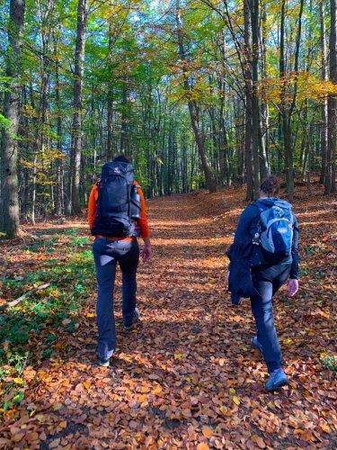 Rheinsteig Etappe 2 – Wanderung von Königswinter nach Bad Honnef