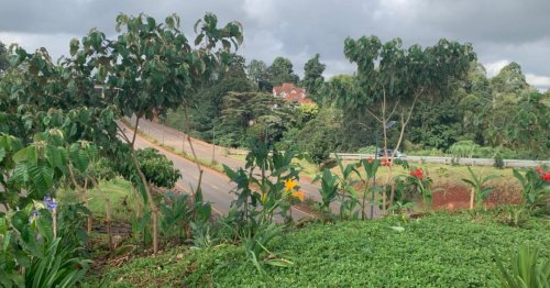 Trees fuelling their own death in Kenya's capital city: a circular bioeconomy could save them