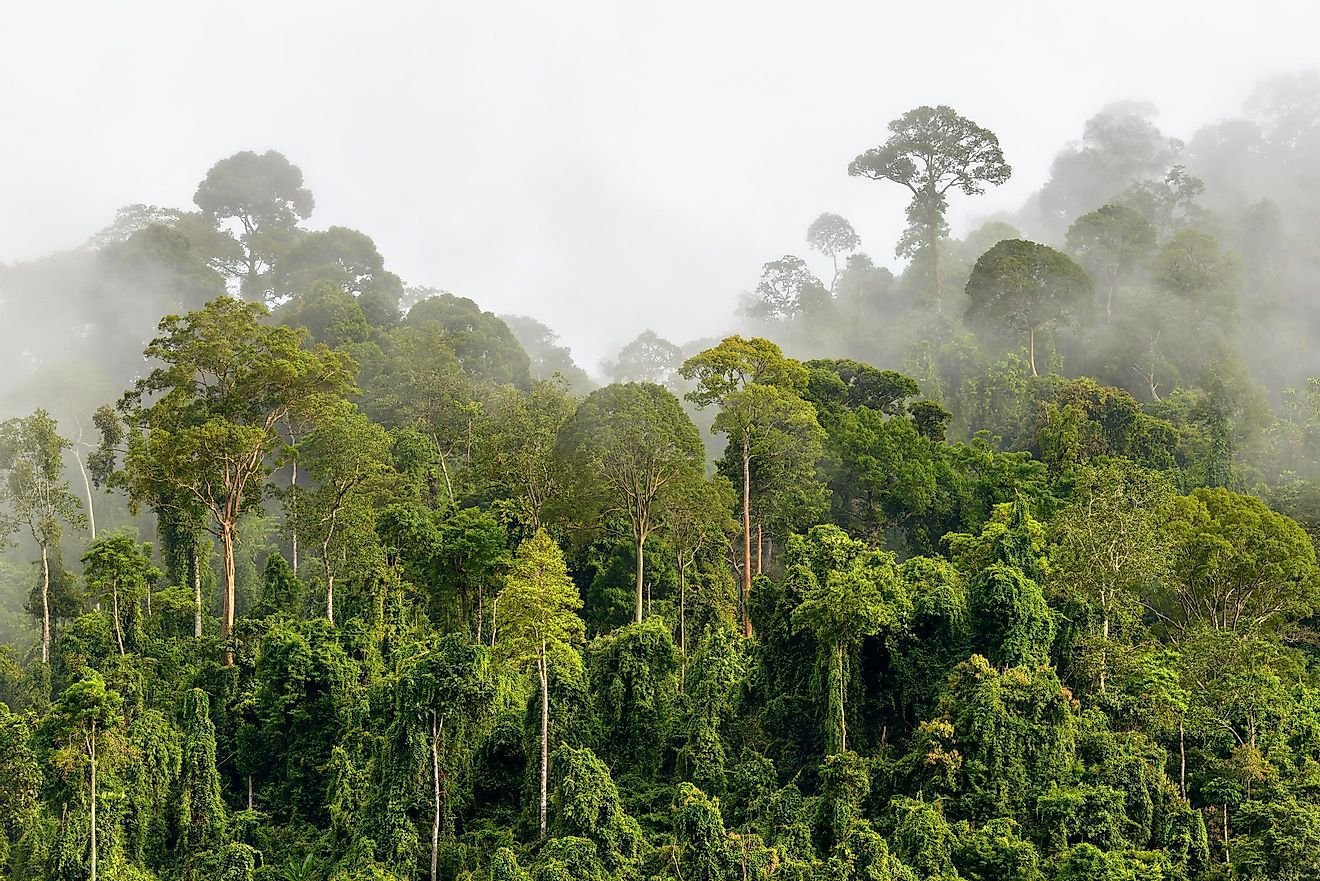 The Biggest Rainforests In The World And How To Visit Them