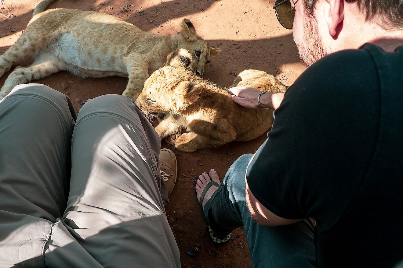 How Bad Tourism Affects Wildlife Around The World