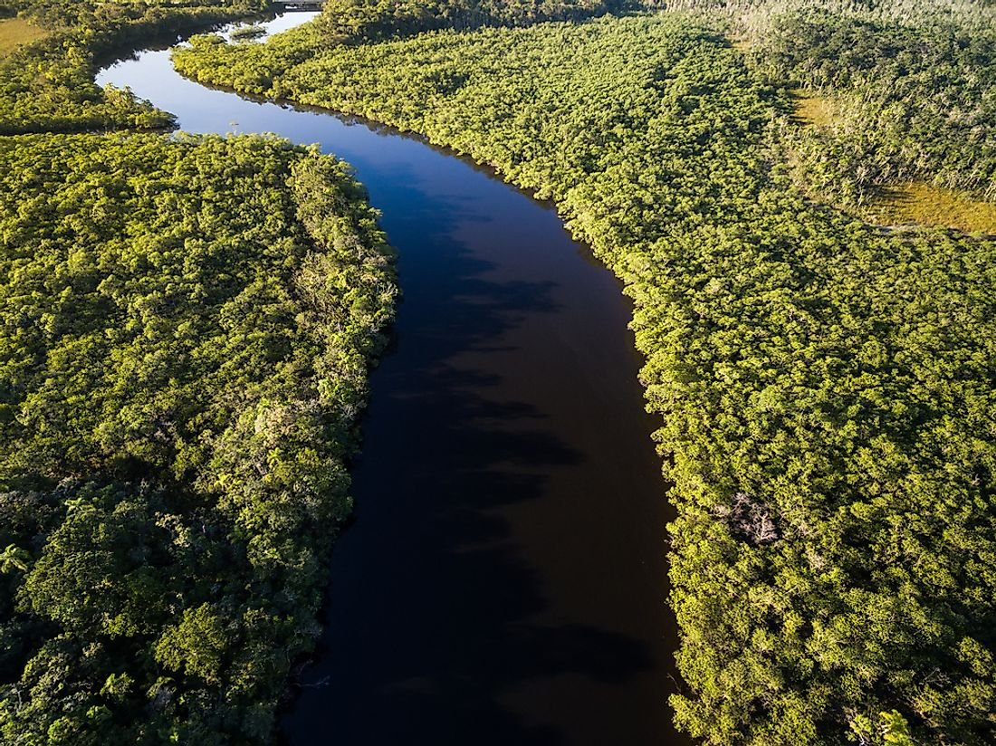 5 Countries With the Largest Rainforest Coverage