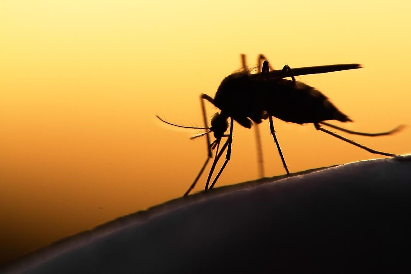 Worst Diseases Transmitted By Mosquitoes
