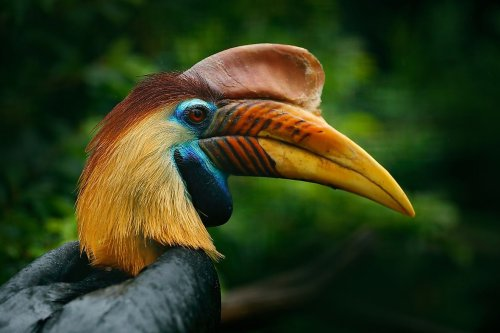10 Most Iconic Animals Of Indonesia