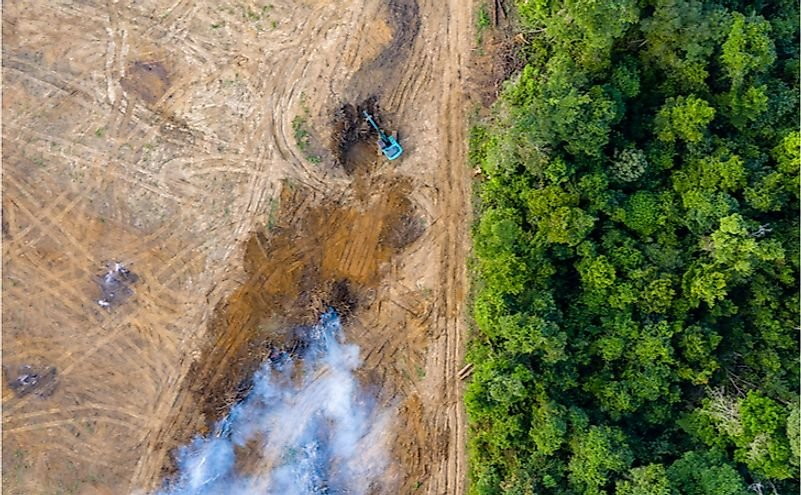 What Would Happen If We Lost The Amazon Rainforest?