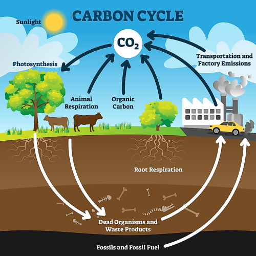 What Is A Carbon Sink?