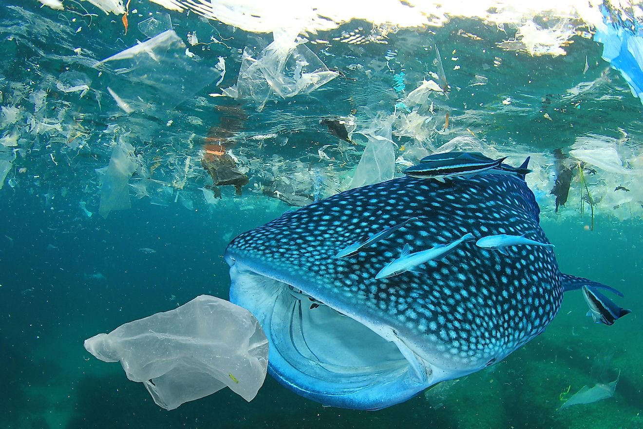 Here Are The Biggest Threats To Marine Wildlife Today