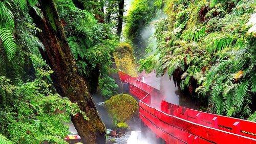 The Biodiversity Hotspot Of The Valdivian Temperate Rainforest