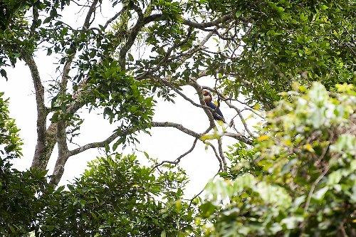 The Biodiversity Hotspot Of Wallacea