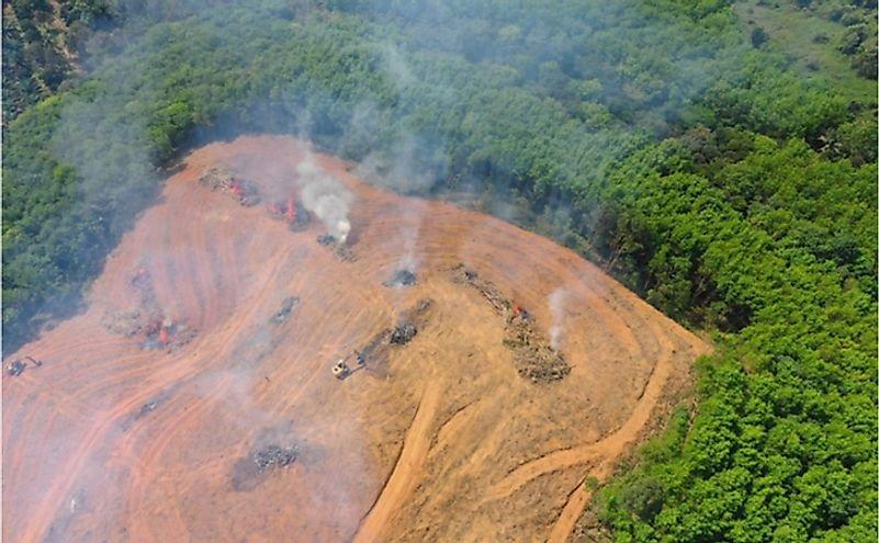 Can A Rainforest Catch Fire?