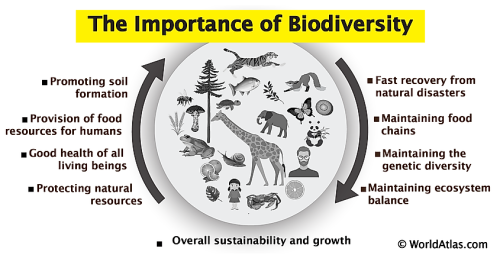 Why Is Biodiversity Critical To Life On Earth?