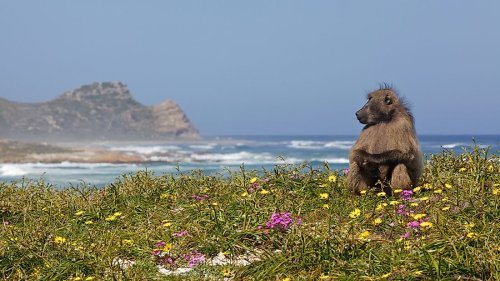 The Eight Biodiversity Hotspots Of Africa