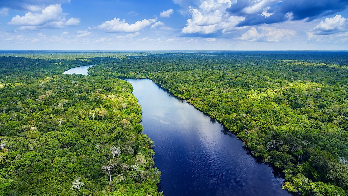 How Much Of The Amazon Rainforest Is Left?