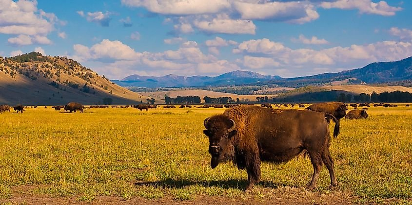 10 Interesting Facts About Yellowstone National Park