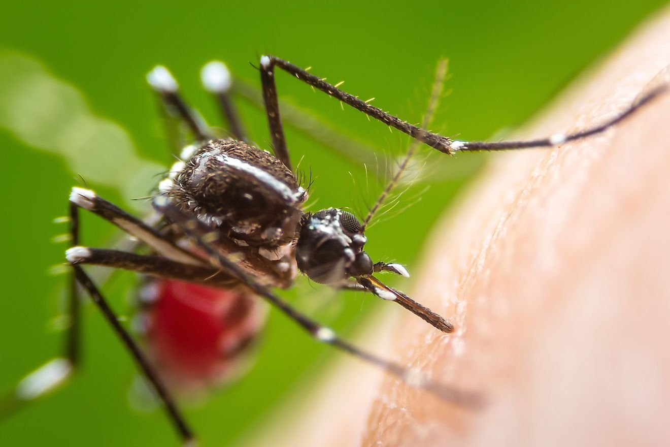 How Many People Are Killed By Mosquitos Every Year?
