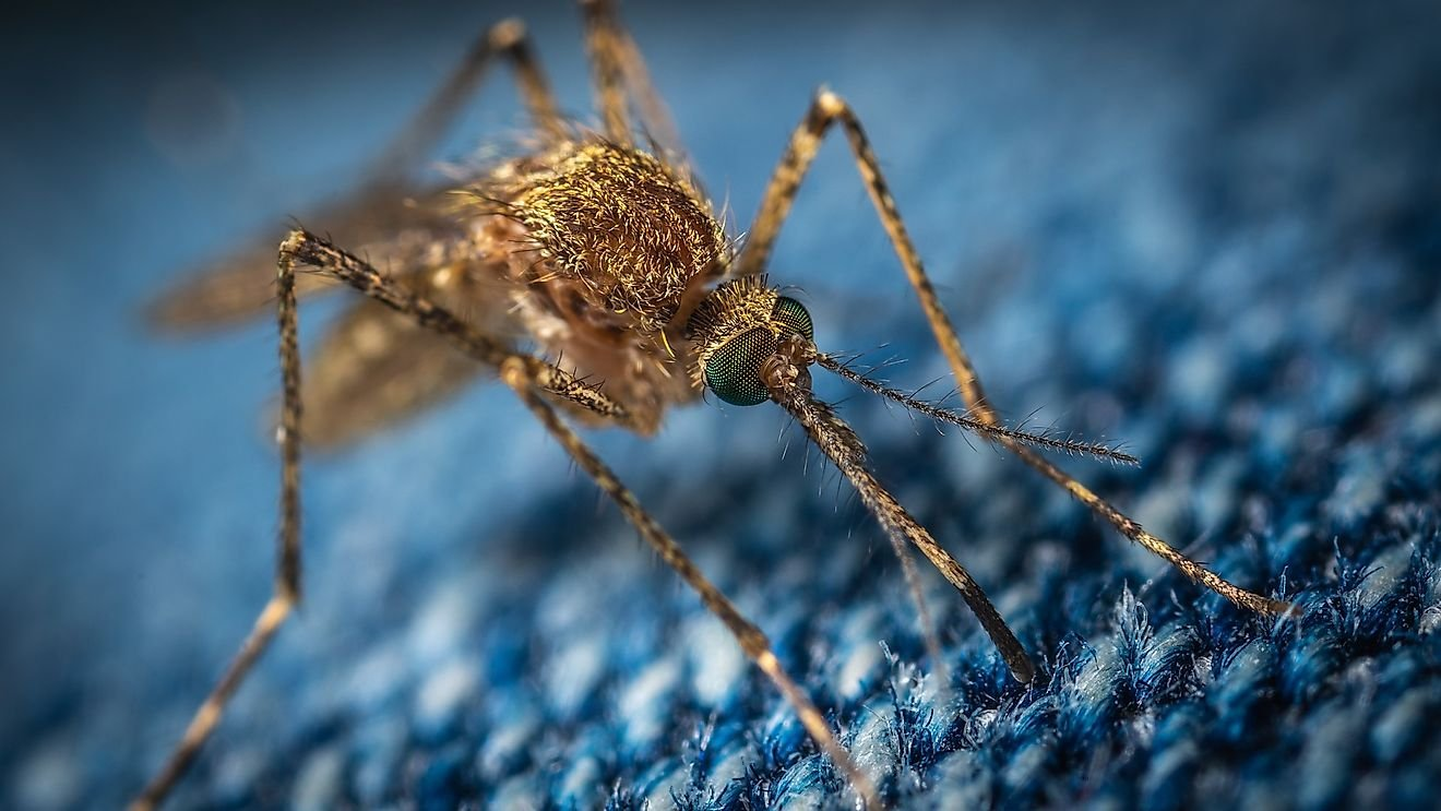 Why Mosquitoes Are The Deadliest Animals On The Planet