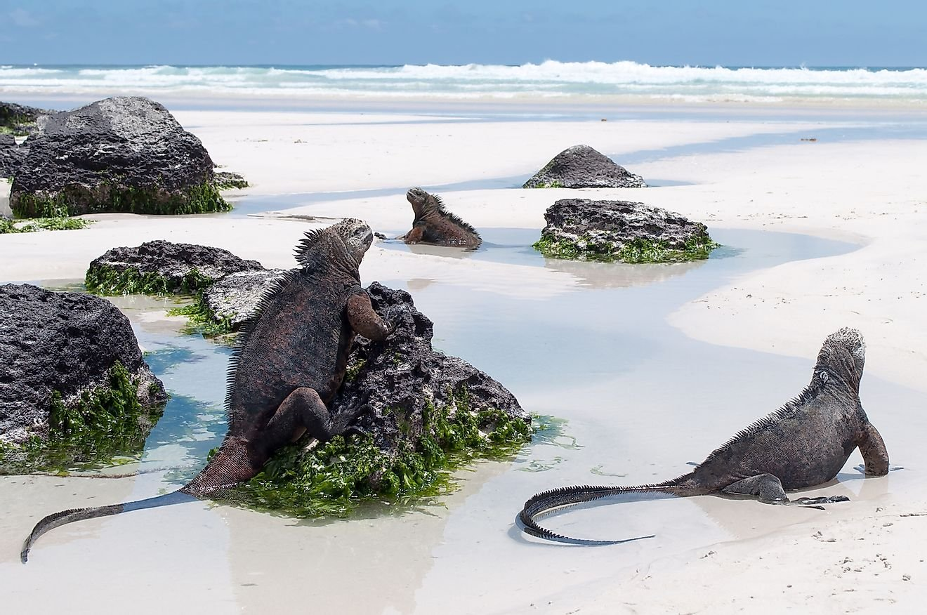 Awesome Reasons To Visit The Galapagos Islands