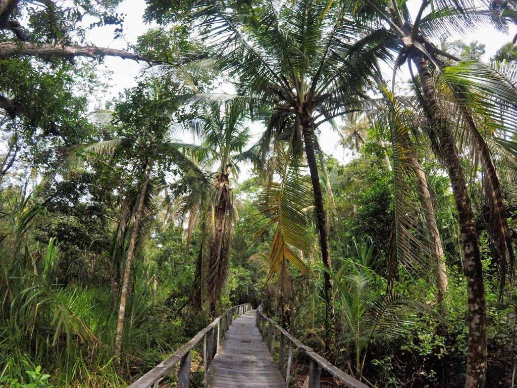 Dschungel Abenteuer Reisen - cover