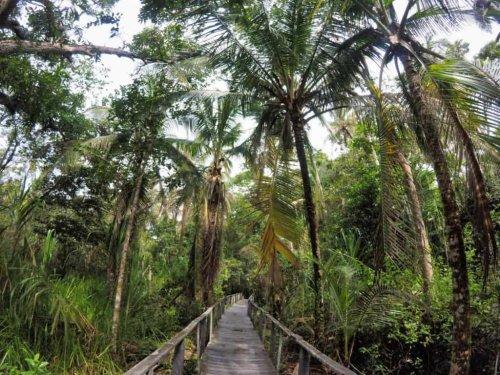 Dschungel Abenteuer Reisen cover image