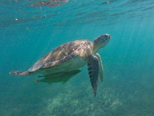 Akumal in Mexiko: Schnorcheln mit Schildkröten auf Yucatán (2021)