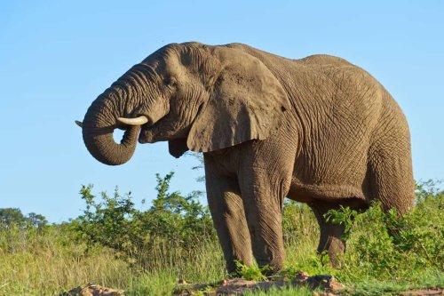 Afrika Reisen cover image